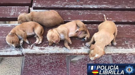 Denuncian el abandono de cuatro cachorros en Librilla