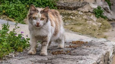 Confiesa a la Policía de Alhama que apaleó a un gato hasta la muerte