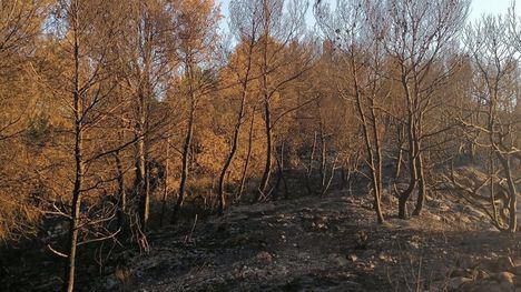 FOTOS Oficialmente extinguido el incendio en la Sierra de la Silla