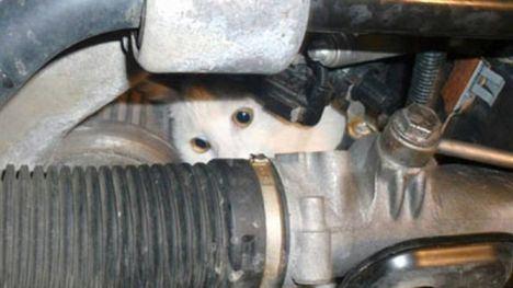 La Policía de Alhama rescata a un gato de los bajos de un coche