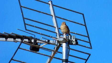Alhama y Librilla deben adaptar las antenas colectivas TDT