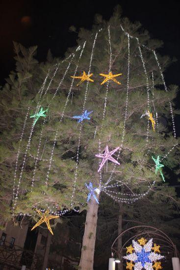 La araucaria del Jardín de los Patos, símbolo de la Navidad, se jubila