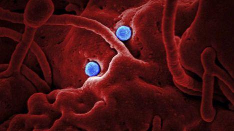 Alhama suma otros 14 contagios en 24 horas