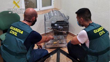 VÍD/FOT Cae una organización de tráfico de aves exóticas