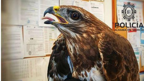 FOTOS Un vecino rescata en Alhama un águila herida