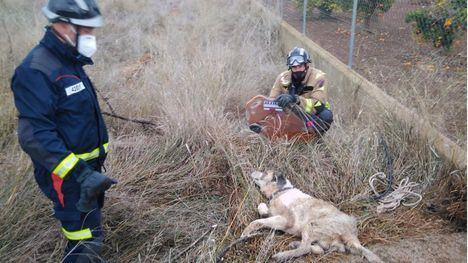 Rescatan a un perro que se había caído a un pozo en Librilla