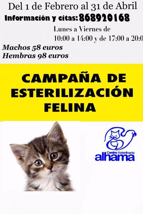 Esterilizar a tu gato tiene descuento en Centro Veterinario Alhama