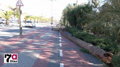 VÍDEO Una palmera del parque del Palmeral cae por el viento
