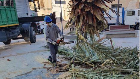 El viento 'tumba' en Librilla la palmera frente al Ayuntamiento