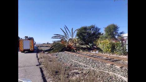 Policía Local atiende más de 60 llamadas por incidencias del viento