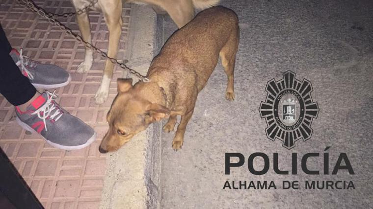 La Policía Local rescata a dos perros de 'su verdugo'